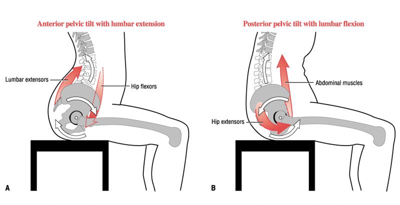 Anterior posterior graphic
